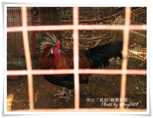 2010.01.01-11越南.JPG