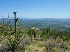 The view here is awesome (j2davis2005) Tags: arizona hiking saguaronationalpark