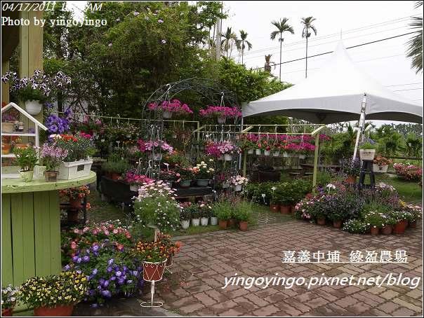 嘉義中埔_綠盈農場20110417_R0018999