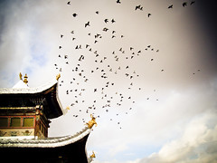 Flight - Shachung (mattlindn) Tags: china old sky building beautiful birds architecture clouds buildings fun temple flying high asia pretty view buddha buddhist traditional religion buddhism tibet amdo tibetan   atmospheric  rainclouds   qinghai tibetanbuddhism     tibetautonomousregion   shachung shyachung