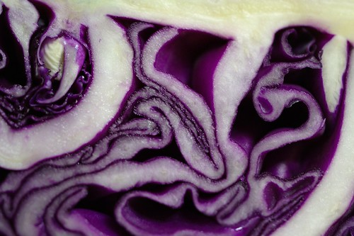 Cabbage Vivisection