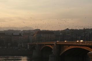 Budapest - Margit híd