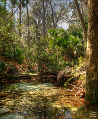 Silver Glen Springs (ScottElliottSmithson) Tags: florida spring springs silverglensprings ocala ocalanationalforest nature river water clear crystalclear reflection green woods forest nationalforest canon eos eos7d 7d dtwpuck scottelliottsmithson scottsmithson naturalsprings centralflorida floridanature lakegeorge springgrove