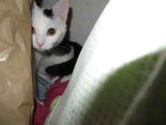 SoCo hiding in the closet