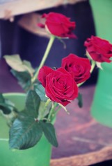 ~ (S a r a  ,) Tags: vienna street red roses 3 flower shop sara all rights to hers adore 2009 reserved nochi loveumya