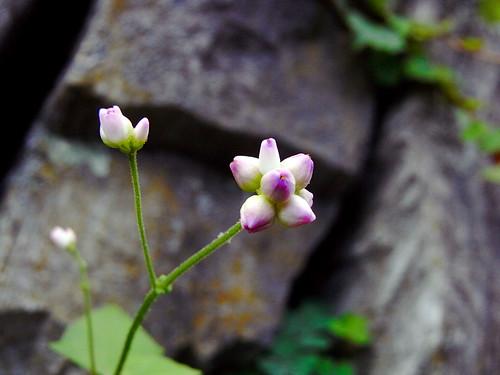 Flower-021