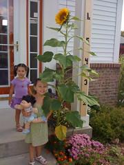 It blooms! 9/5/09