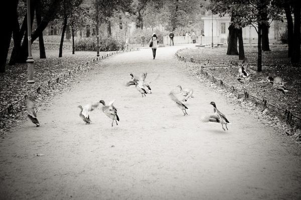 Ducky-ducky