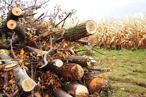 tree_pile