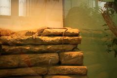 IMG_7428 (iris66de) Tags: zoo urlaub 2009 frankfurtmain