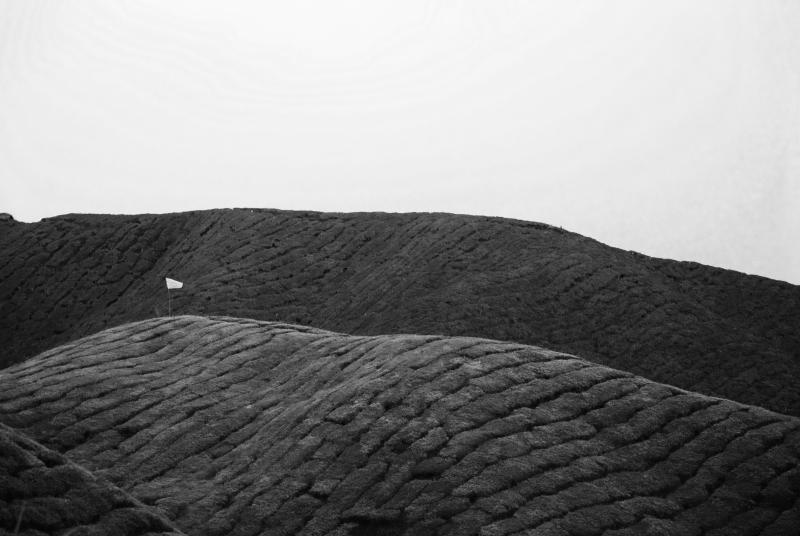 Tea Plantation Abstract