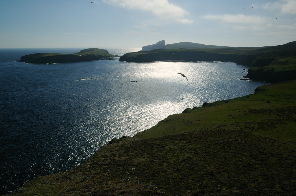 The World's Best Photos of fairisle and scottish - Flickr Hive Mind