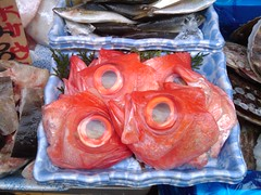 Fish Heads, Fish Heads,