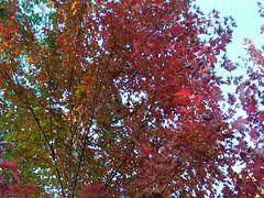 Fall Colors Boulder   DSCN0279