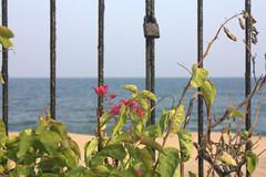 The sea at Pondicherry.. (Juhi Sidharth) Tags: blue sea green leaves sand lock bluesky shore locked frenchtown smalltown ashram pondicherry southindia aurobindo beachroad bluesea seabreeze incredibleindia frenchcolony india2009
