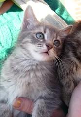 Free Kittens! (Philosopher Queen) Tags: cats cute adorable fluffy kittens kitties cuteness babycats tabbycats bestofcats