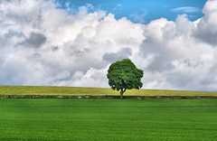 Green Tree in Field - Simple Nature Scene - Scotland (Magdalen Green Photography) Tags: blue nature scotland pretty dundee scottish tayside lonelytree coolclouds coolgreen ruralview scottishfield simplenaturescene iaingordon magdalengreenphotography greentreeinfield