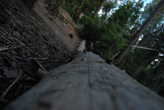 Artsy shot by me. (theladysrevenge) Tags: camping nature bigtrees sequoianationalpark treest