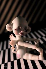 Kenotte - Kitty Flying Mouse - Circus Kane (Vali.Tox.Doll) Tags: mouse flying doll circus kitty tiny bjd kane nefer