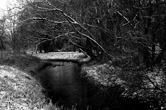 The River in Winter. (pstone646) Tags: river weather nature ashford kent blackandwhite monochrome outdoors water reflections snow trees