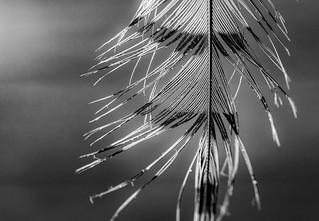 Macro Monday - Black and White