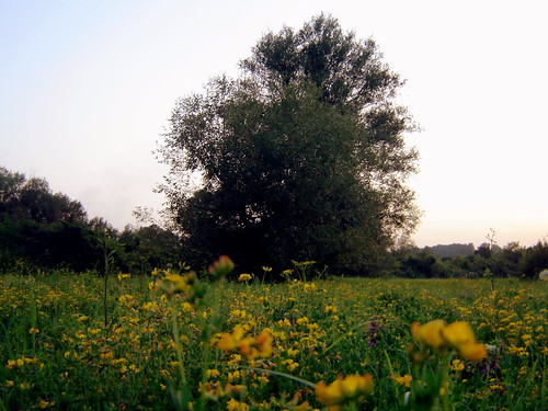 drvo1