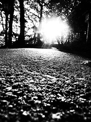 黄昏前 ~ before dusk (20090726_akitsu_09) (pqw93ct) Tags: bw white black monochrome japan twilight dusk before saitama ricoh tokorozawa 埼玉 モノクロ 白黒 所沢 akitsu gx200 秋津 黄昏前