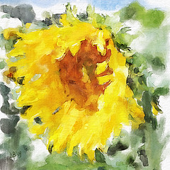 The sunflower (piker77) Tags: painterly flores flower art digital photoshop watercolor painting interesting media natural aquarelle digitale manipulation simulation peinture illusion virtual sunflower watercolour transparent acuarela fiori blume tablet technique wacom stylized pintura imitation  aquarela aquarell emulation malerei pittura virtuale virtuel naturalmedia     piker77wc arthystorybrush