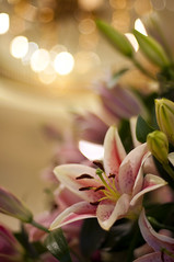 Bokeh Gazer (michaeljosh) Tags: flower lily bokeh stargazer shangrila chandelier stargazerlily flowerarrangement hotellobby nikkor50mmf14d project365 nikond90 michaeljosh