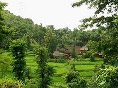 Lush Green Konkan Village (dpinto64) Tags: india westernghats konkan