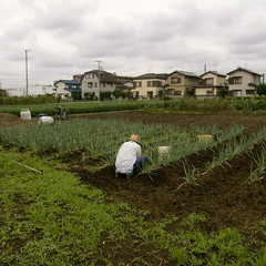 Field work ( ken ) Tags: field japan farming  saitama kawagoe    grd2
