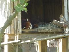 Columbus Zoo 066