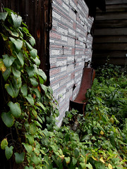 secrets behind you (a.r. lee) Tags: trees plants building leaves metal vines iron shack oldgrass