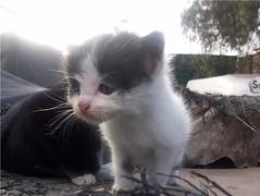 gatitos ins2