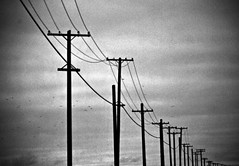 Keepin' the lines.......... (cvanstane) Tags: birds july portangeles wires summertime poles connected curve distance edizhook