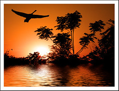 GOOD BYE DEAR RICHA (DEVENDRA PAL(AWAY)) Tags: ocean trees sunset red orange sunlight white black reflection tree water sunshine river october relationship pal 2009 devendra crepusculos inidia relation theunforgettablepictures 469photographer