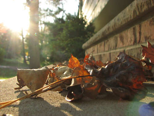 Fall, straight out of the camera