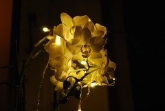 light flower (MatiasSingers) Tags: light flower flowerlight