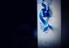 gift. (*northern star°) Tags: blue azul canon 50mm dof box blu chocolate bleu explore short ribbon curl blau scatola chocolat ricciolo cioccolata northernstar nastro explored donotsteal eos450d ©allrightsreserved scatolo gayodin northernstarandthewhiterabbit northernstar° tititu digitalrebelxsi eff18ii usewithoutpermissionisillegal northernstar°photography ifyouwannatakeitforpersonalusesnotcommercialusesjustask