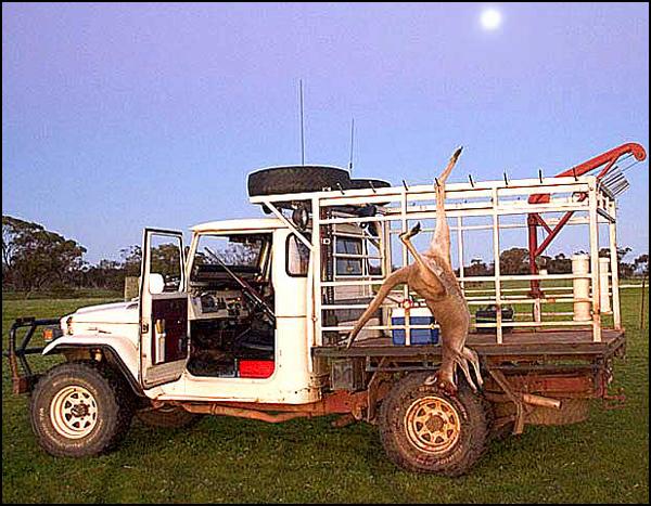 Kangaroo, Ute, Moon