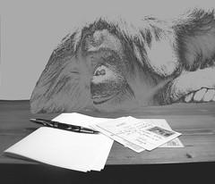 ghost-writer (juri saluki) Tags: bw pen writing handwriting gorilla postcard gimp bee orangutan writer phantom fantasma ghostwriter scimmia jurisaluki olympussp565z