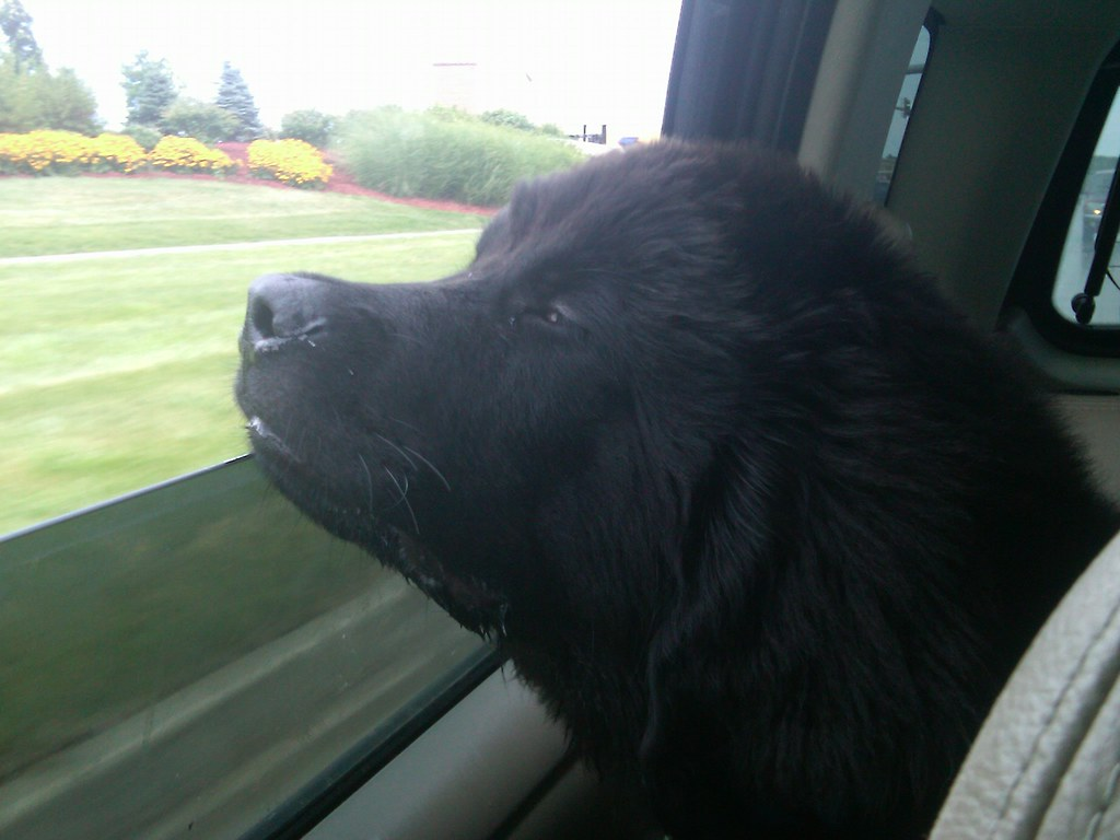 Tucker enjoying fresh air
