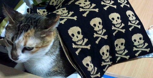 Saffy's scarf