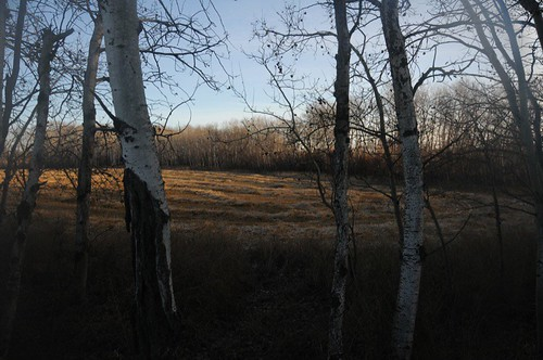Looking towards lake from West property line
