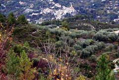 oliveraie contes