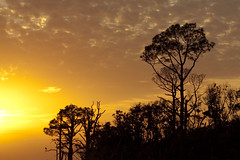 Quiet Pleasure Of Looking At A Sunset (Mona Hura) Tags: santa county trees sunset orange sun tree silhouette yellow pine clouds islands colorful december gulf florida rosa national sound breeze seashore panhandle santarosacounty 6987 santarosasound gulfbreezeflorida