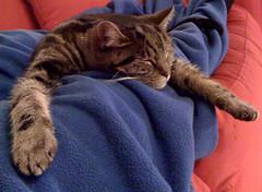 Cat nap (alistairh) Tags: cat sleep spanky alistairbhall