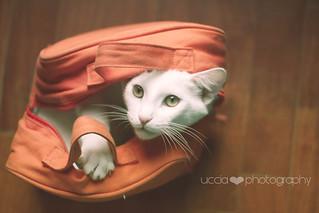 inside the bag...