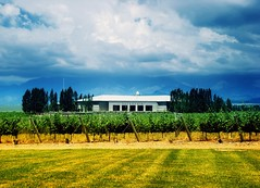 Salentein winery - Bodega Salentein (Uco, Mendoza, Argentina) (Claudio.Ar) Tags: mountains color topf25 argentina vineyard bravo wine sony vine winery mendoza andes bodega dsc malbec h9 ucovalley salentein valledeluco claudioar claudiomufarrege bestcapturesaoi