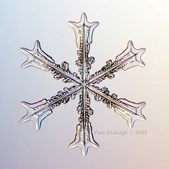 SC_9813 (Pam Eveleigh) Tags: snowflake winter snow cold macro ice nature weather snowflakes crystals crystal micro transparent pure snowcrystal